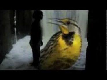 Vėlinių liūdesio paukštė