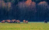 Informacijos apie keliones po Lietuvą paklausa socialiniuose tinkluose auga. Vietinio turizmo TOP20